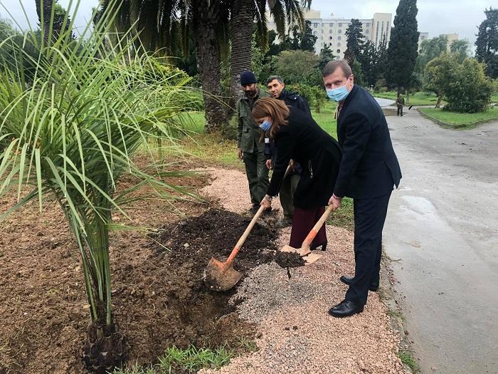 Висадка зелених насаджень, саджанців пальм та дерев у Тунісі